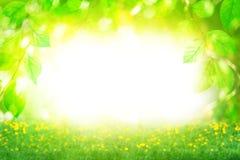 Beau paysage de jour ensoleillé d'été, branches vertes de feuilles et gisement de fleurs sur le fond brouillé lumineux de bokeh é photographie stock libre de droits