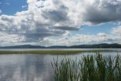 Beau paysage de l'eau avec les nuages et le jonc dans un grand lac Photos stock