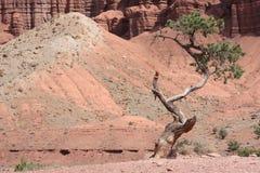 Beau paysage de l'Utah Photos libres de droits