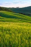 Beau paysage de la Toscane Images libres de droits