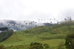 Beau paysage de la vallée de Cocora, près de à la ville coloniale de Salento, en Colombie image libre de droits