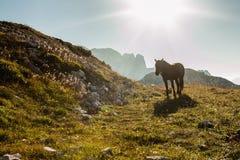 Beau paysage de montagne avec des chevaux dans le premier plan Photo libre de droits