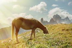Beau paysage de montagne avec des chevaux dans le premier plan, amour de cheval Photographie stock