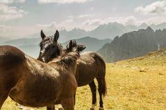Beau paysage de montagne avec des chevaux dans le premier plan, amour de cheval Image libre de droits