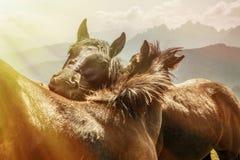 Beau paysage de montagne avec des chevaux dans le premier plan, amour de cheval Images libres de droits