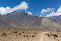 Beau paysage de montagne avec frôler des chèvres Photo stock