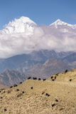 Beau paysage de montagne avec frôler des chèvres Photo libre de droits
