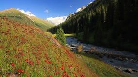 Beau paysage de montagne avec les fleurs et la rivière de montagne banque de vidéos