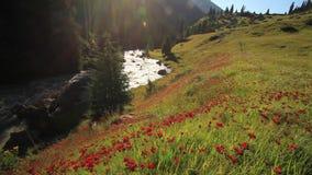 Beau paysage de montagne avec les fleurs et la rivière de montagne clips vidéos