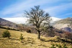 Beau paysage de montagne d'hiver de Bulgarie image stock