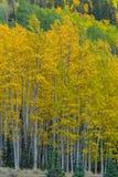 Beau paysage de montagne dans Aspen, tellurure, le Colorado images stock