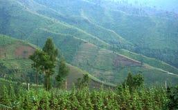 Beau paysage de nature Photo libre de droits