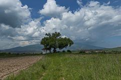 Beau paysage de nature d'été avec la clairière et la forêt vertes en montagne de Vitosha de tovard de montagne de Plana Images stock