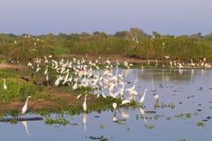 Beau paysage de Pantanal, Amérique du Sud, Brésil Photographie stock