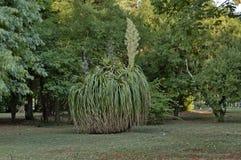 Beau paysage de parc d'Emmarentia images stock