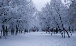 Beau paysage de parc d'hiver Photographie stock