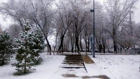 Beau paysage de parc d'hiver Image libre de droits