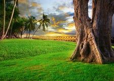 Beau paysage de parc de champ d'herbe verte contre le ciel sombre images libres de droits
