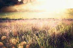 Beau paysage de pays d'automne ou de fin d'été avec l'herbe, le champ et les rayons de soleil photographie stock