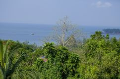 Beau paysage de port tropical Blair India d'arbres image libre de droits