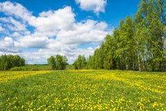 Beau paysage de ressort avec les champs jaunes des pissenlits Image stock