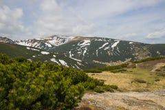 Beau paysage de ressort en montagnes de Carpathiens l'ukraine Image stock