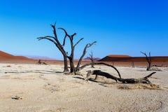 Beau paysage de Vlei caché dans le désert de Namib Photo libre de droits