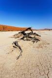 Beau paysage de Vlei caché dans le désert de Namib Photos libres de droits