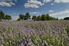 Beau paysage des champs Photos stock