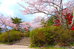 Beau paysage des fleurs de cerisier, Japon image stock