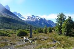 Beau paysage en parc national de visibilité directe Glaciares, EL Chaltén, Argentine Image libre de droits
