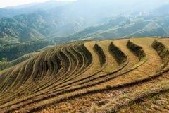 Beau paysage en terrasse de zones Image libre de droits