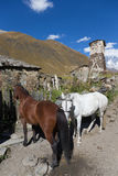 Beau paysage et chevaux de montagne d'automne dans Svaneti georg Photographie stock libre de droits