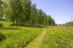 Beau paysage le bois vert avec des couleurs jaunes dans une herbe verte Photographie stock libre de droits