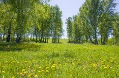 Beau paysage le bois vert avec des couleurs jaunes dans une herbe verte Image stock
