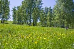 Beau paysage le bois vert avec des couleurs jaunes dans une herbe verte Image libre de droits