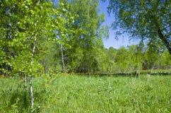Beau paysage le bois vert avec les fleurs oranges dans une herbe verte Image libre de droits