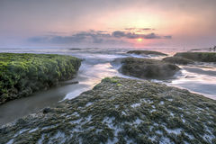 Beau paysage marin moussu à Yogyakarta Photo stock