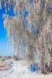 Beau paysage neigeux d'hiver Images libres de droits