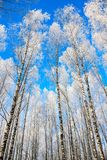 Beau paysage neigeux d'hiver Image libre de droits