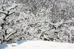 Beau paysage neigeux d'hiver Photos stock