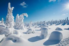 Beau paysage neigeux d'hiver La neige a couvert des sapins sur le fond La Finlande, Laponie image libre de droits