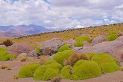 Beau paysage près du lac de sel de Salar De Surire, Isluga Volcano National Park, Chili Photographie stock libre de droits