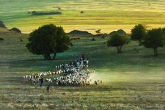 Beau paysage rural avec le berger et les moutons au printemps photographie stock libre de droits