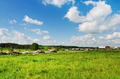 Beau paysage rural d'été Photographie stock libre de droits