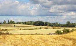 Beau paysage scandinave - champ et ferme photos stock