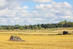 Beau paysage scandinave - champ et ferme photos libres de droits