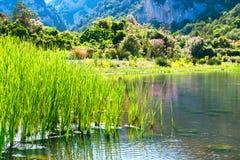 Beau paysage sur la côte de lac Photos libres de droits