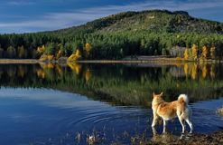 Beau paysage sur le lac en montagnes image stock