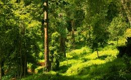 Beau paysage très gentil du parc de Bryant de kodaikanal photos stock